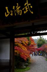 秋の寺院のお出迎えーⅠ