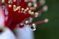 花の涙-Ⅲ