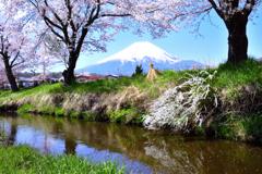 「令和」の春ーⅡ