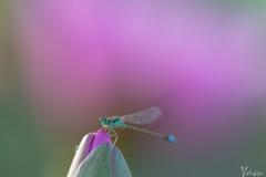 Pink aura