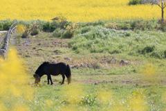 駿(春)馬