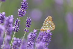 In a purple dream
