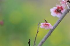 春告げ色 Ⅱ