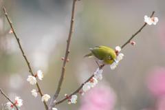 うれしい春