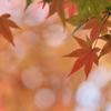 秋、きらめき