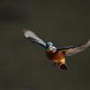 新年初鳥(初撮り)