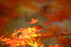 秋の終わり2