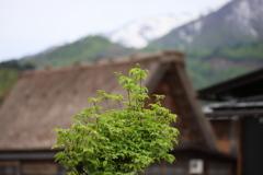 山里の春2