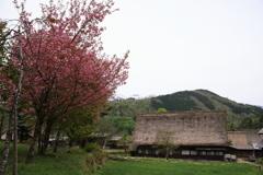山里の春6
