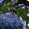 働きハチ3