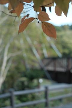 秋の訪れ2