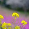 春の2部作①
