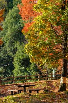 秋のひと時