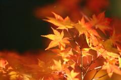 秋の終わり1