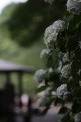 雨の季節到来