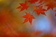 秋の終わり3