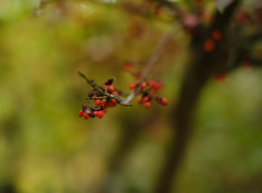 秋を楽しみましょう3