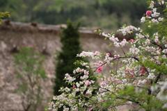山里の春9