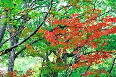 通りすがりの紅葉