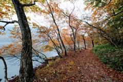 湖畔の散策路③