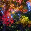 嶺公園の紅葉①