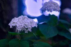 梅雨間の光