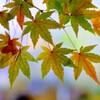 敷島公園の紅葉②
