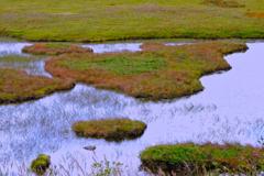 八島ヶ原湿原②