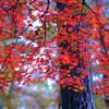 赤城自然園の紅葉①