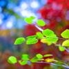 赤城自然園の紅葉④