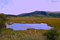 八島ヶ原湿原①