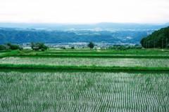 高地の水田