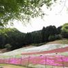 青紅葉と芝桜