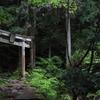 森林と鳥居
