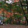 秋色を眺めながら