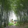 竹林と列車