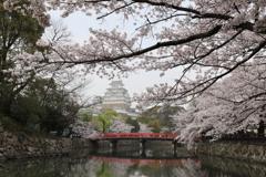 満開!姫路城