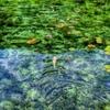 透明を泳ぐ