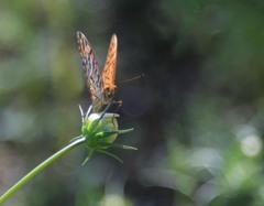蝶の一休み