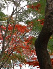 紅葉の五重塔