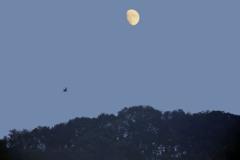 上弦の新月