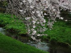 春の小川ー1