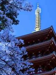 桜と相輪ー高幡不動尊
