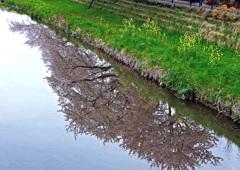 春の小川-2