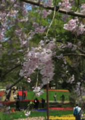 春風と遊ぶ