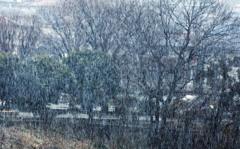 突然雪が・・