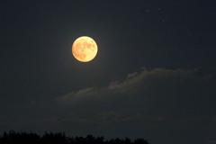 十六夜の月(いざよい)