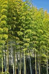 竹の秋ー日本庭園で