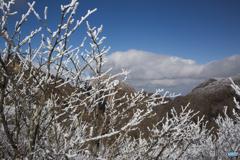 青空・雲・霧氷