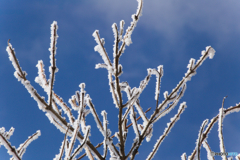 冬の青空・霧氷